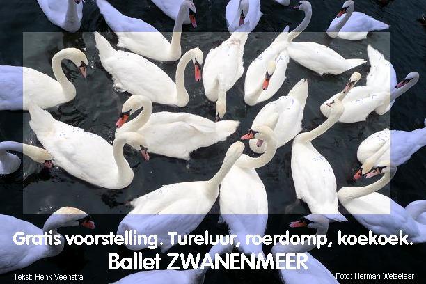 Zwanenmeer