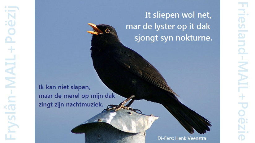 Friesland-MAIL+Poëzie: De merel.
