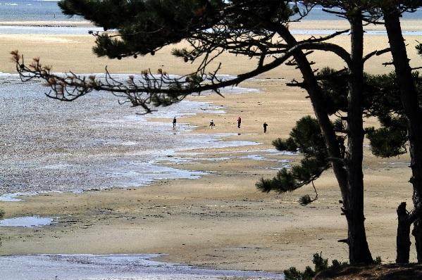 Terschelling-strand.