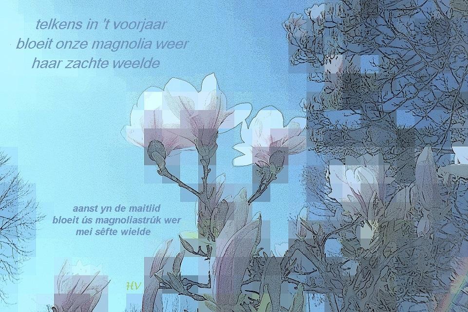 Magnolia di-fers